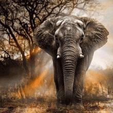 5D diamond paint elefant motiv – 40 x 50 cm