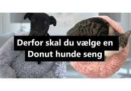 Derfor skal du vælge en donut hundekurv!
