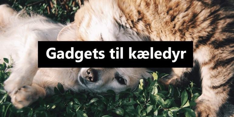 De bedste gadgets til kæledyr